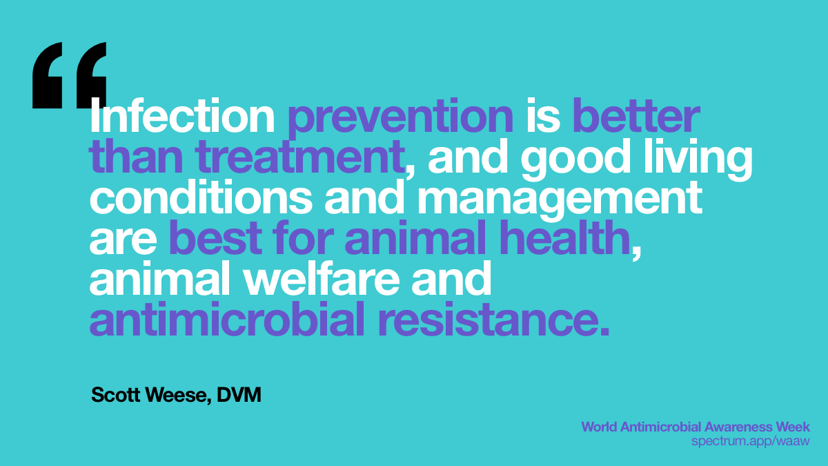 Infection   prevention is better than treatment, and good living conditions and management   are best for animal health, animal welfare and antimicrobial resistance.